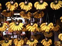 benefits_of_bananas_pictures_1600x1200_t1.jpg